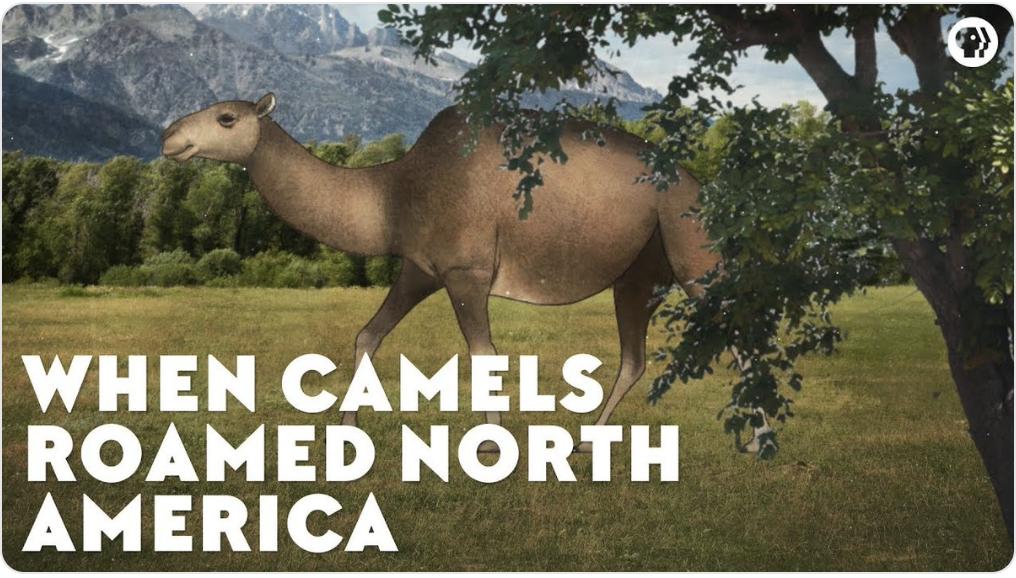 Camel evolution video screenshot by Rachel Fritts
